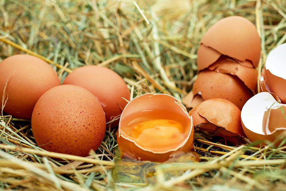 El ITC va a utilizar la cáscara del huevo para la fabricación de azulejos